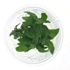 Combo môi trường nuôi cấy mô thực vật